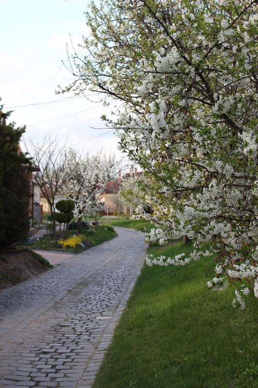 Bagfalu, Bag | Bag tavasszal